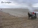 Paardenzegening Vlissegem editie 2016_8